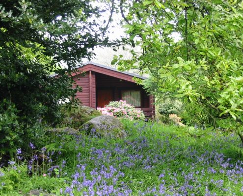 front-view-bluebells